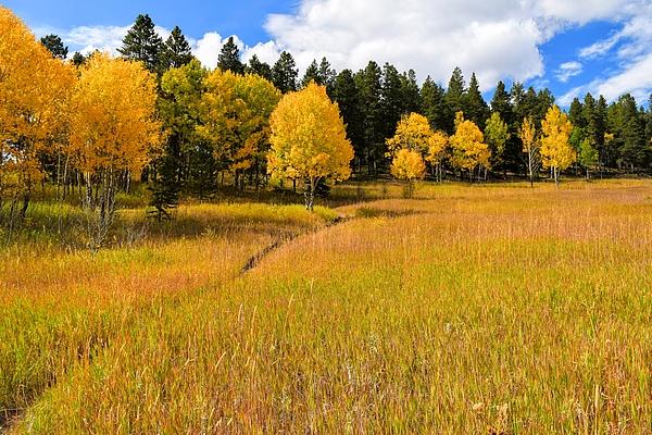 Aspen Tree Meadow